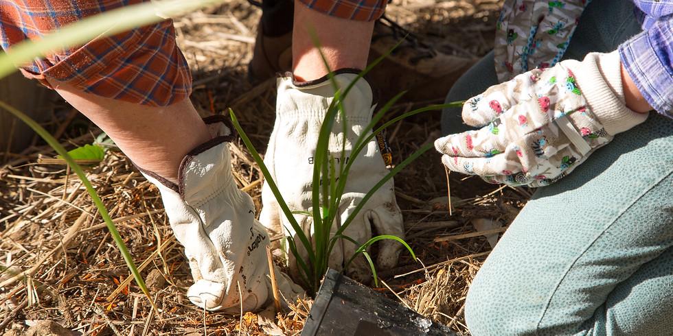 Rakali Festival - Tree Planting & Birdspotting