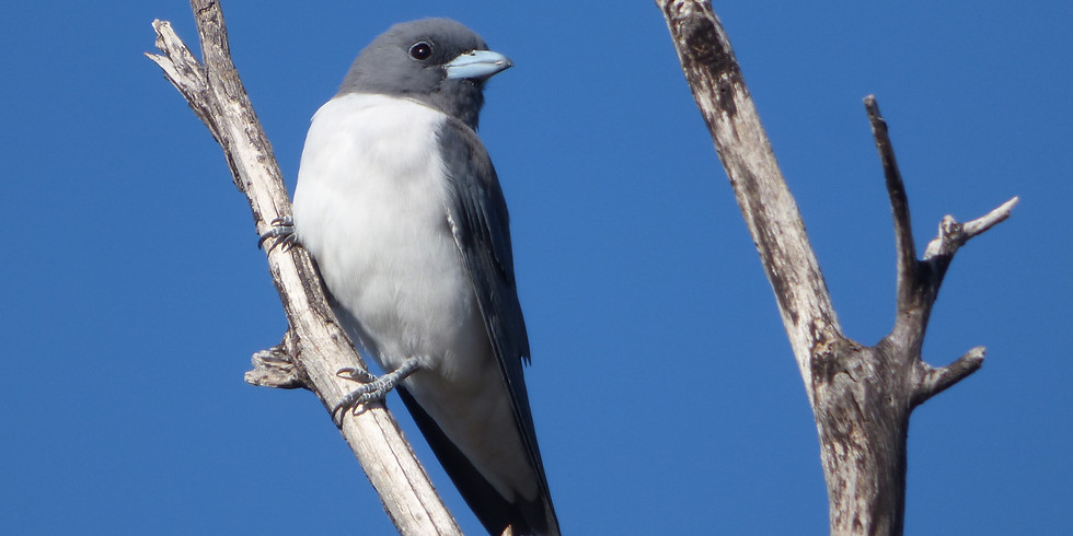 Go Birdwatching at the Oxley Creek Common