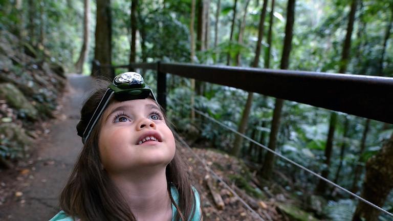 Spotlight Toohey Forest Ecowalk
