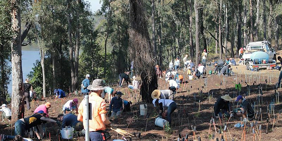 Get your hands dirty! Oxley Creek Common Working Bee