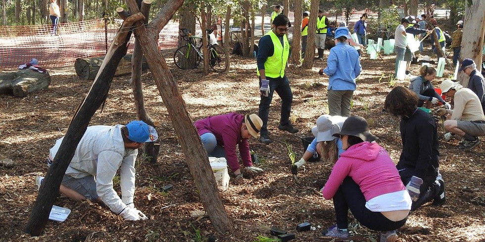 Greenslopes Demonstration Catchment Project