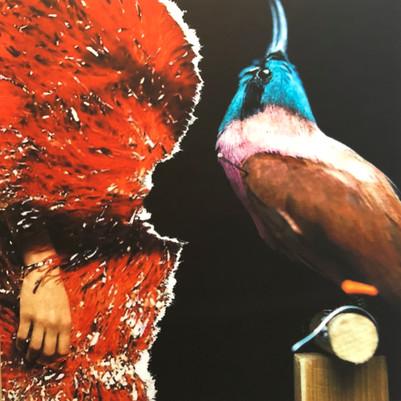 birddress.jpg