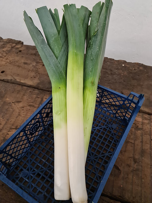 LEEK GREEN each