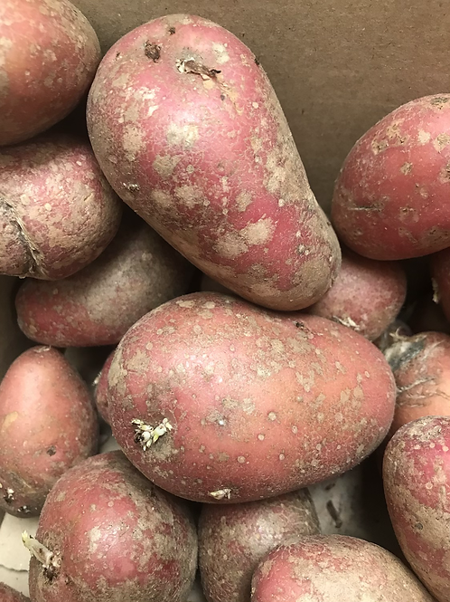 RED POTATOES 1KG
