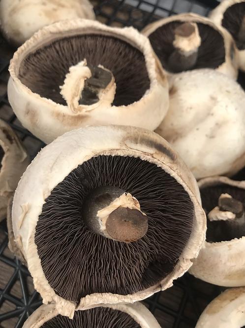Flat Mushroom 250G