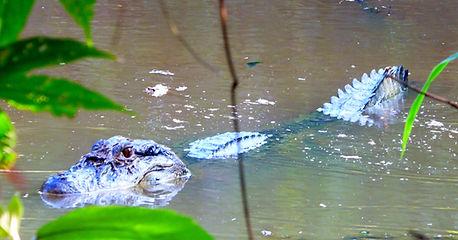 wildlife in the Amazon jungle