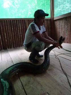 Ramiro with a 5m Anaconda