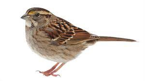 The Sparrow That Did Not Fall