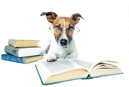 Dog reading 4.jpg