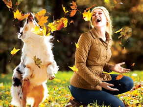 How do dogs positively impact our wellbeing?