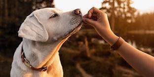 dog and treats 2.jpg