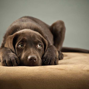 Is Your Dog a HSD (Highly Sensitive Dog)?