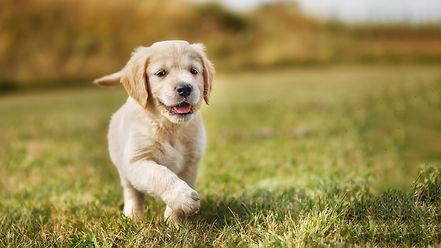 puppy-running-playing.jpg