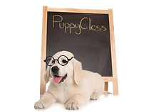Puppy-Class-2.png