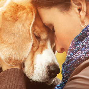 How does your dog really feel about you?