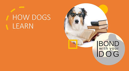 PowerPoint presentation about how dogs learn.