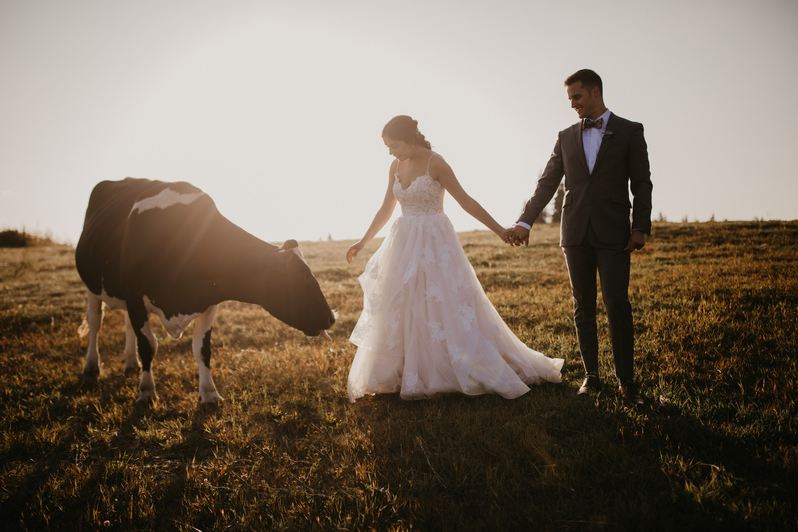 Mid August - Bride and Groom with AK Dimaond J Ranch Milk Cow