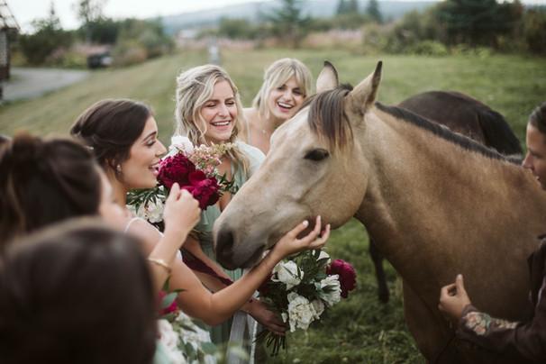 Late July - Horses