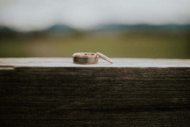 Rings on the Cedar Fence