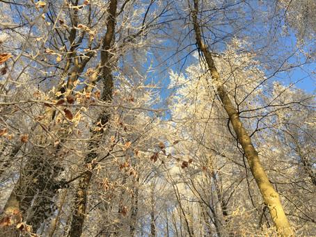 Das Immunsystem stärken - mit Nordic Walking durch den Winter