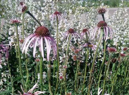 Prairie Days- June Newsletter