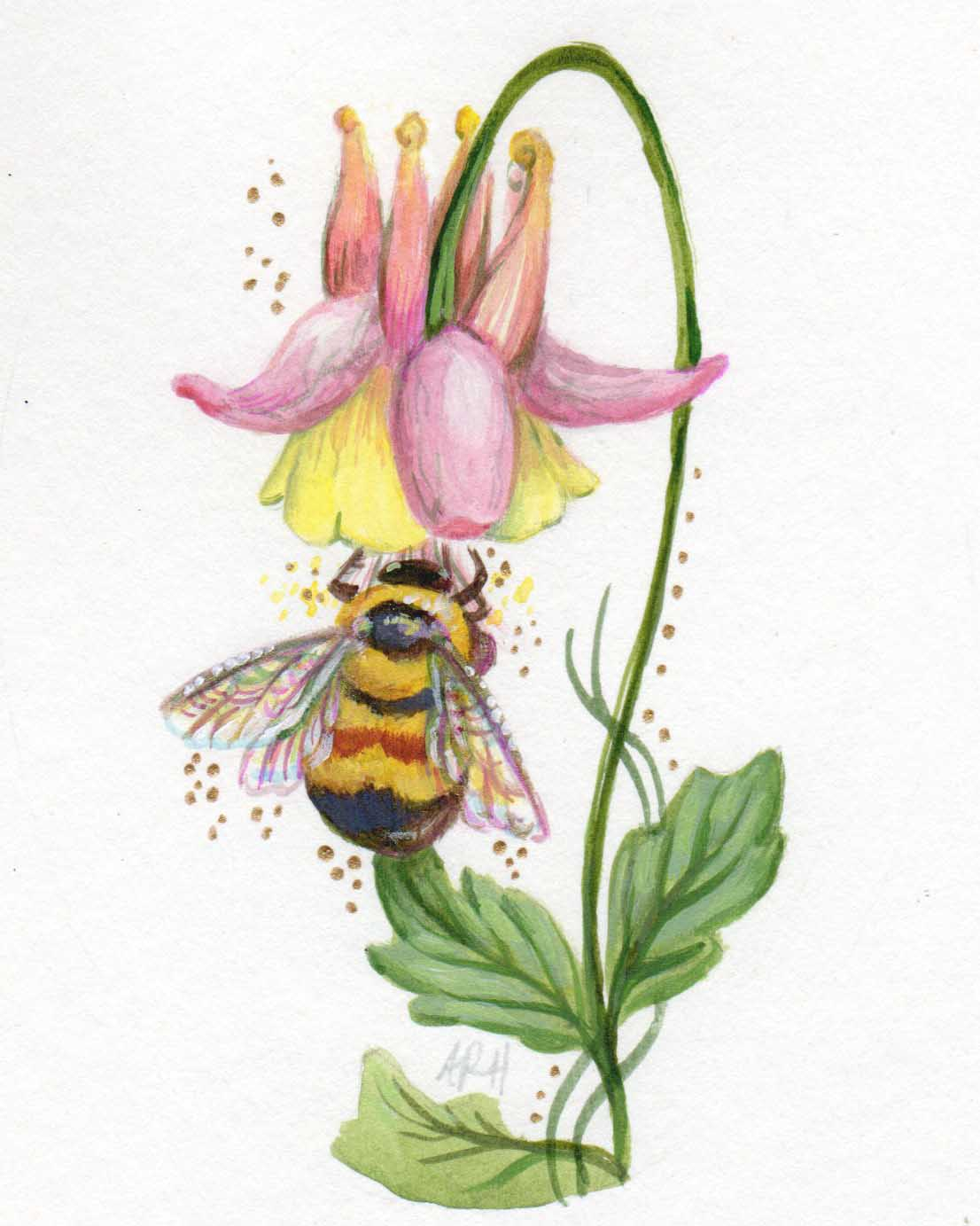 Wild Columbine and Rustypatch Bumblebee