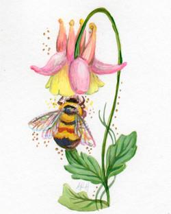 Wild Columbine and Rustypatch Bumblebee