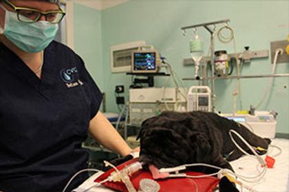 anestesia.jpg