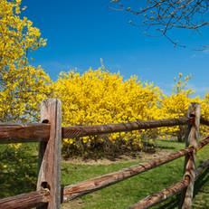 Spring, Upstate New York