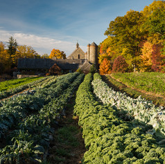 Harvest Time in New York State