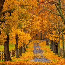 Autum in New York State