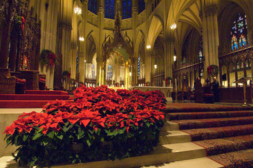 St. Patricks Cathedral, NYC