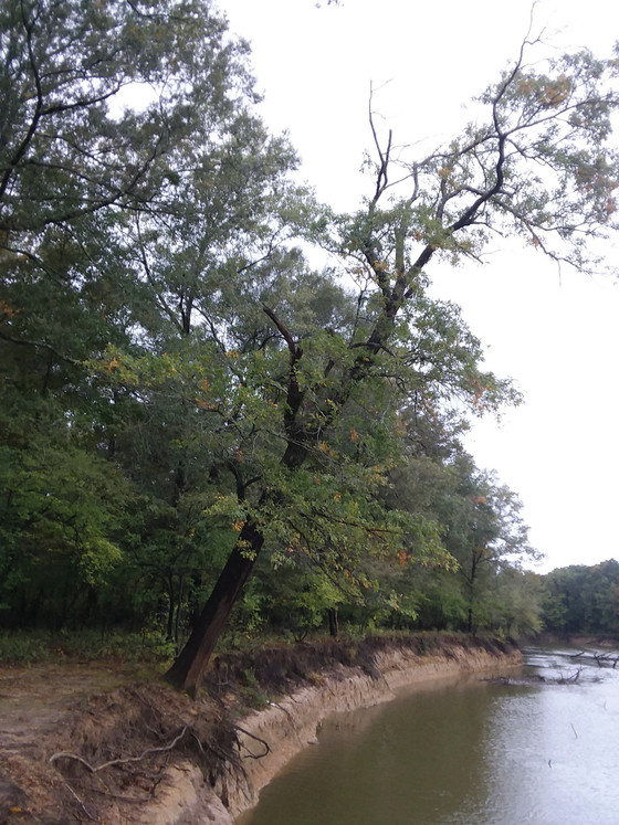 Falling Tree