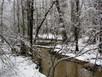Swamp Snow