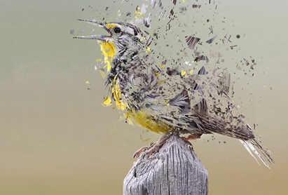 Bird Calamity