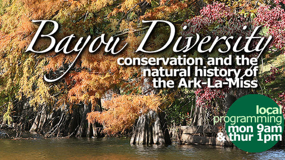 Award-winning Bayou-Diversity!