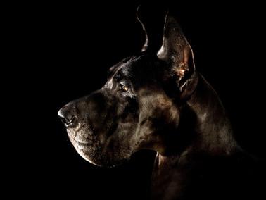 Hundefotos Hundeportraits 066.jpg