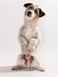 Hundefotos Hundeportraits 101.jpg