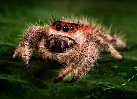 006-insektenfotos-spinnenfotos-gottesanbeterin-fliegen-kaefer-andyhunger.jpg