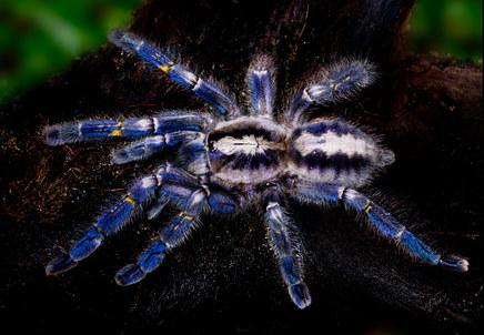010-insektenfotos-spinnenfotos-gottesanbeterin-fliegen-kaefer-andyhunger.jpg