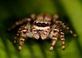 034-insektenfotos-spinnenfotos-gottesanbeterin-fliegen-kaefer-andyhunger.jpg