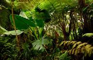 025-landschaftsfotos-naturfotos-pflanzenfotos-botanik-bluetenfotos-andyhunger.jpg