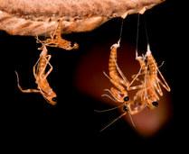 008-insektenfotos-spinnenfotos-gottesanbeterin-fliegen-kaefer-andyhunger.jpg