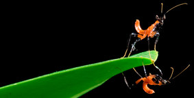 021-insektenfotos-spinnenfotos-gottesanbeterin-fliegen-kaefer-andyhunger.jpg