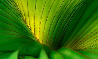 024-landschaftsfotos-naturfotos-pflanzenfotos-botanik-bluetenfotos-andyhunger.jpg
