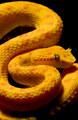 021-schlangenfotos-giftschlangenfotos-reptilienfotos-andyhunger.jpg