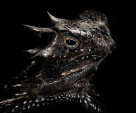 026-echsen-chameleons-geckos-krokodile-andy-hunger.jpg
