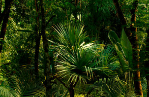 012-landschaftsfotos-naturfotos-pflanzenfotos-botanik-bluetenfotos-andyhunger.jpg