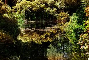 017-landschaftsfotos-naturfotos-pflanzenfotos-botanik-bluetenfotos-andyhunger.jpg