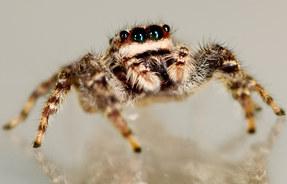 004-insektenfotos-spinnenfotos-gottesanbeterin-fliegen-kaefer-andyhunger.jpg